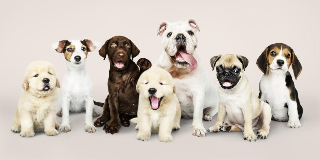 راهنمای گام به گام انتخاب و خرید غذای خشک سگ بر اساس نژاد سگ